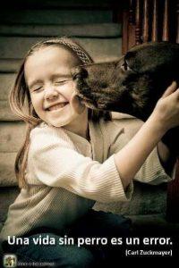 Una vida sin perro es un error